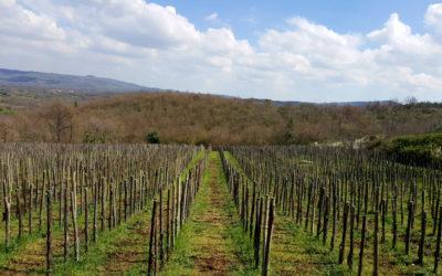 San Giovenale Habemus, un grande vino laziale