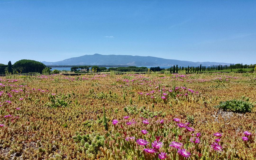 Maremmachevini: la Toscana che non ti aspetti