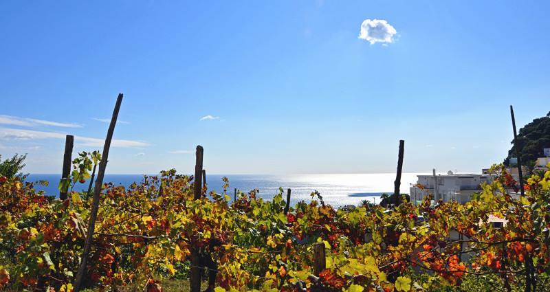 Roma, 26 novembre – Focus sui vini della Campania