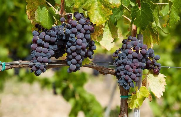 Roma, 10 febbraio – Viaggio nella Sardegna del vino