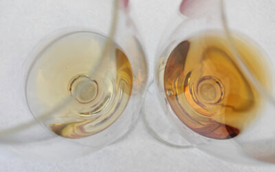 L'ambasciata georgiana a Roma celebra il vino in anfora